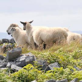 Dave Byrne - Baa Baa Black Sheep