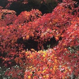 Shimada Toshio - Kyoto Japan