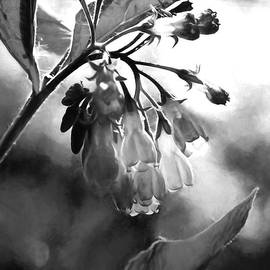 Leif Sohlman - 12 Black and white Wild flower lightened by sun