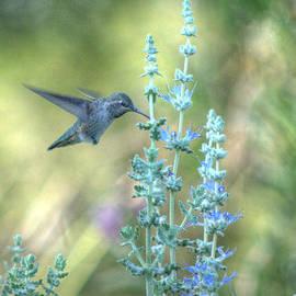 Tam Ryan - Hummingbird