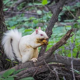 Patti Deters - Albino Squirrel