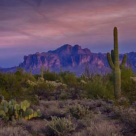 Saija  Lehtonen - A Beautiful Desert Evening