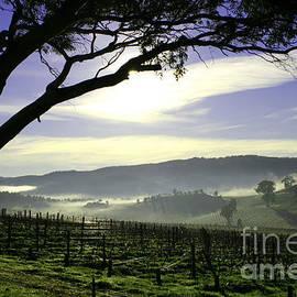 John Wallace - Australian Landscape