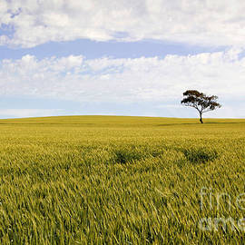 John Wallace - Australian Rural Landscape