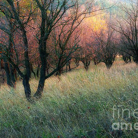 Igor Baranov - Autumn colors