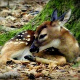 Karen Wiles - Bambi