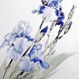 Greta Corens - Blue Iris