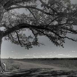 Jane Linders - Burr Oak Tree