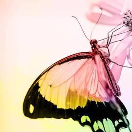 Jerri Moon Cantone - Butterfly