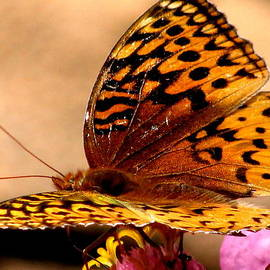 Selma Glunn - Butterfly