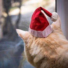 Dockside Colors - Do Cats Dream Of Santa ?