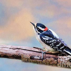 Darren Fisher - Downy Woodpecker