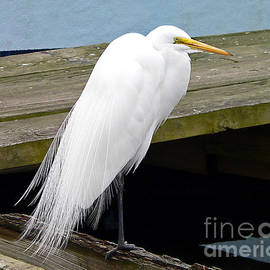 Al Powell Photography USA - Elegant Egret
