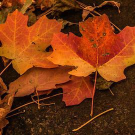 Tam Ryan - Fallen Leaves