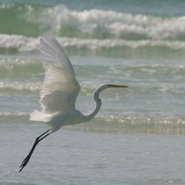 Christiane Schulze Art And Photography - Flying White Egret