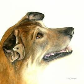 Nan Wright - German Shepherd Dog