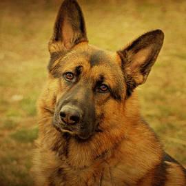 Sandy Keeton - German Shepherd Dog