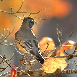 Nava  Thompson - Glowing Robin