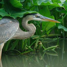 Art Spearing - Great Blue Heron
