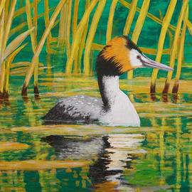 Brian West - Great Crested Grebe