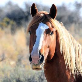 Athena Mckinzie - Horse Beauty