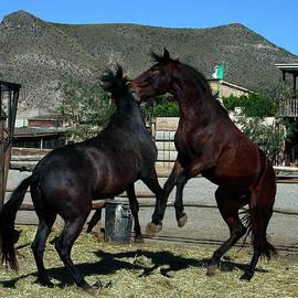 Colette V Hera  Guggenheim  - 2 Horses in love Almeria Spain