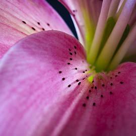 Christi Kraft - In the Pink