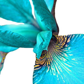 Jennie Marie Schell - Japanese Iris Turquoise White Two