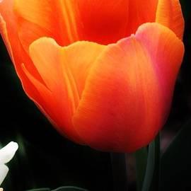 Bruce Bley - Light Up My Life