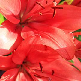 Lali Kacharava - Lilies