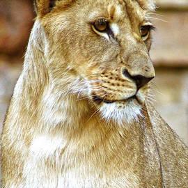 DiDi Higginbotham - Lioness