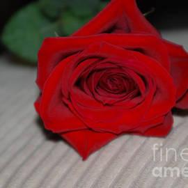 Oksana Semenchenko - Love is...