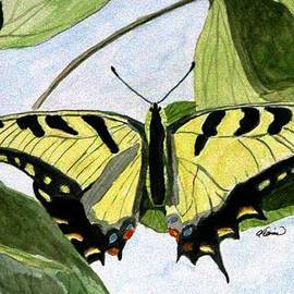 Angela Davies - Male Eastern Tiger Swallowtail