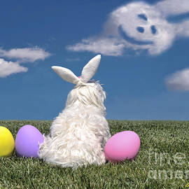 Andrea Auletta - Maltese Easter Bunny