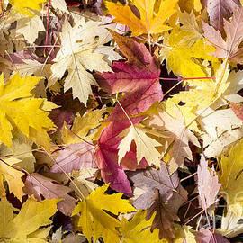Steven Ralser - Maple Leaves