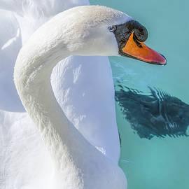 LeeAnn McLaneGoetz McLaneGoetzStudioLLCcom - Mute Swan on St Clair River