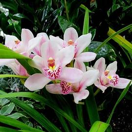 Lena Kouneva - Orchid