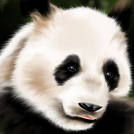 Veronica Minozzi - Panda