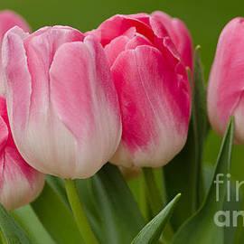 Nick  Boren - Passionate Pink