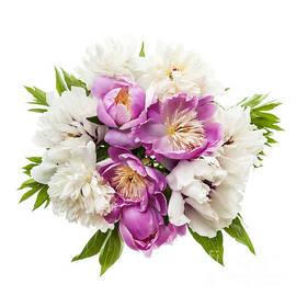 Elena Elisseeva - Peony flower bouquet