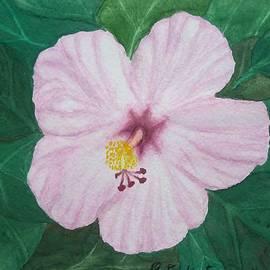 Patty Dudinetz - Pink Hibiscus