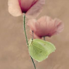 Jaroslaw Blaminsky - Poppies