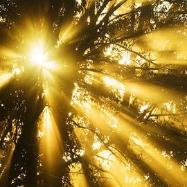 Thomas R Fletcher - Rays of Light