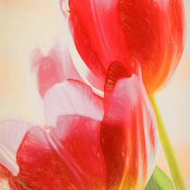 Christian Muller - Red Tulips