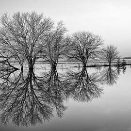 Tom Druin - Reflection