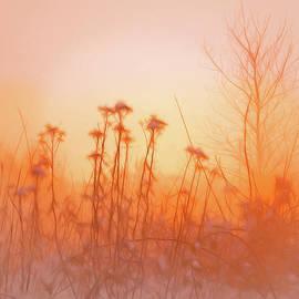 Kasandra Sproson - Satin Sunset