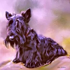 Scott Wallace  - Scottish Terrier Portrait