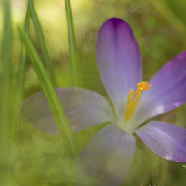 Caitlyn  Grasso - Spring Haze