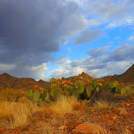 James Welch - Springtime in Arizona