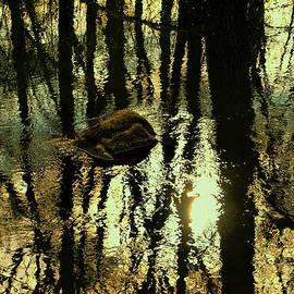 Tom Druin - Stillness...